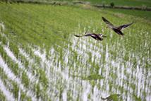 岐阜の米通販「農家のお米.com」のカモの画像