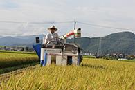 岐阜の米通販「農家のお米.com」の稲刈り画像S