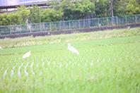 岐阜の米通販「農家のお米.com」のサギの画像