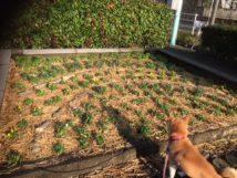 岐阜の米通販「農家のお米.com」の公園の花壇