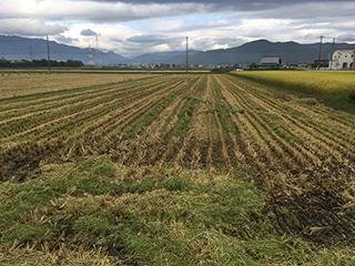 農家のお米.com10月16日ハツシモ稲刈り